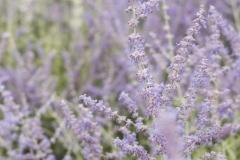 GardenParty16_059